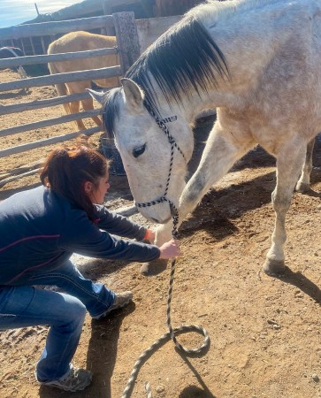 equine Acupuncture 155